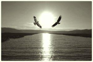 Aguilas2_1